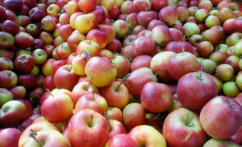 Apples - Lionspart